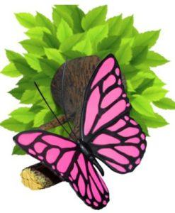 Butterfly-3D-DECO-night-light-Safest-night-light-around-0