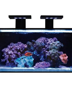 Innovative-Marine-Nuvo-Fusion-Nano-20-Gallon-Premium-starter-Kit-0