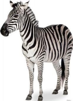 Animals-Advanced-Graphics-Life-Size-Cardboard-Standup-0