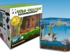 Wild-Creations-Ecoaquarium-by-Jewel-Ecoaquariums-0