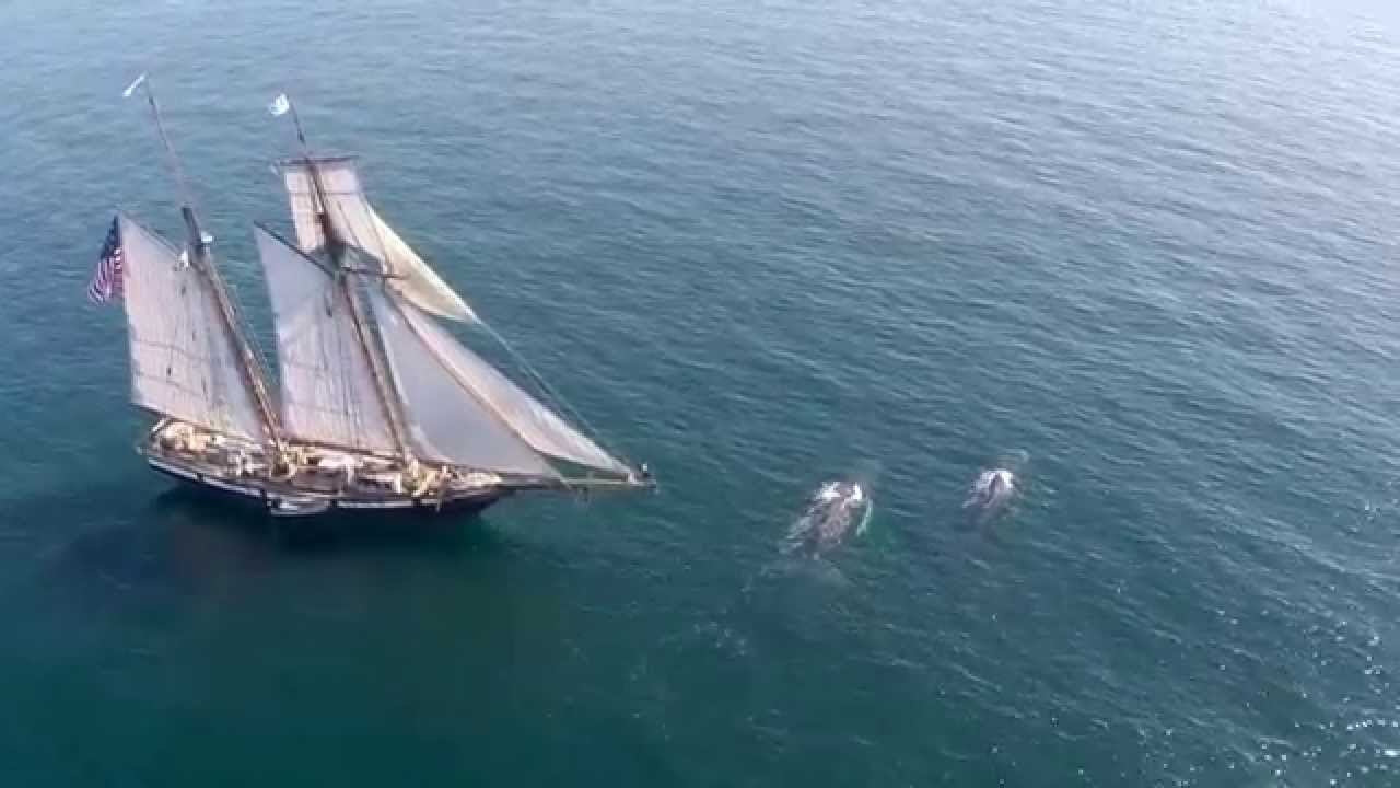 Aerial Drone Footage of Whales