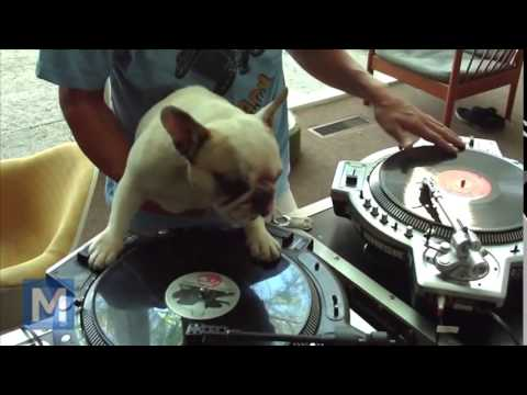 Funny & sweet Dog – DJ course has friends !