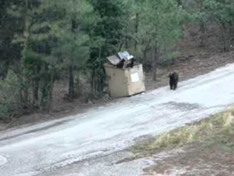 Heros Save Three Cubs Trapped In Dumpster