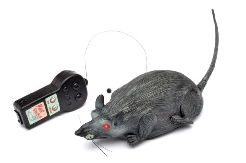 Westminster-Radio-Controlled-Rat-0