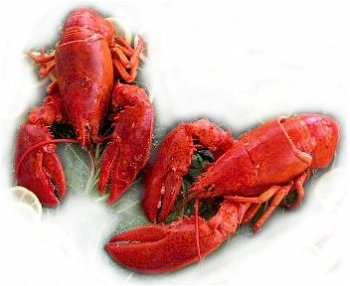 2-Live-Maine-Lobsters-125-lbs-Each-0
