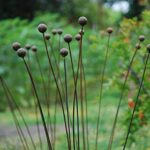 Kinetic-Metal-Garden-Art-Sculpture-Grouping-of-7-1balls-Ball-Weeds-0